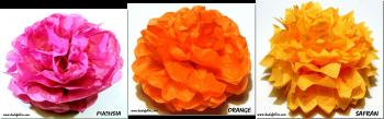 asso orange fushia